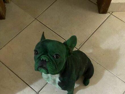 Zmienia się w Hulka