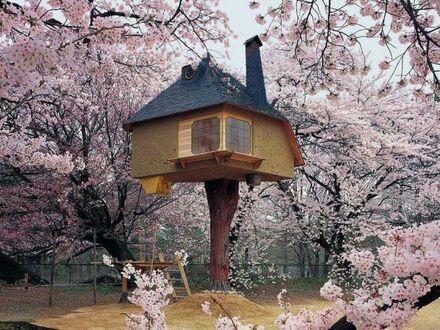Domek na drzewie w malowniczej scenerii