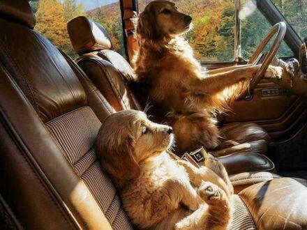Jadą na rodzinną wycieczkę