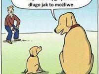 Mądra psina