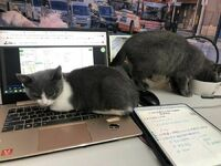 Nie dadzą w spokoju pracować