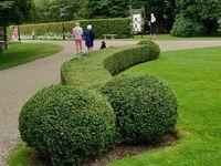 Ulubiony krzak ogrodnika