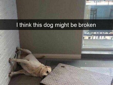Myślę, że ten pies może być popsuty