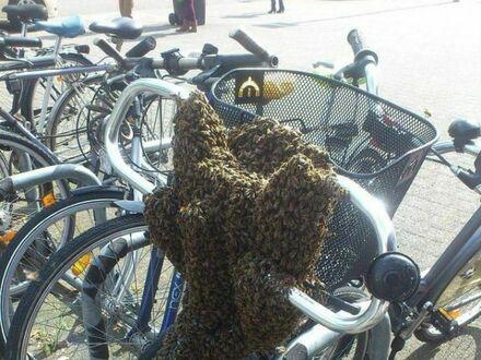Tym rowerem sobie nie pojeździ