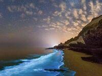 Bioluminescencyjny plankton na plaży zatoki perskiej iran