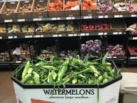 GMO arbuzy