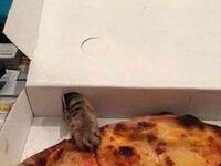 Zastanawialiście się kiedyś, po co są te dziury w pudełkach od pizzy?