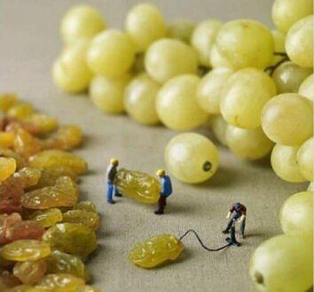 Jak powstają winogrona