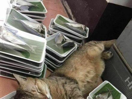 Kot w raju