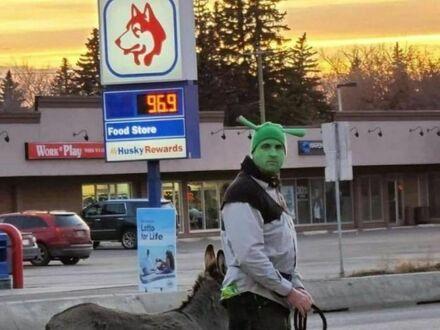 Shrek i osioł ruszają na przygodę
