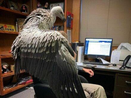 Z ptaszkiem na ramieniu