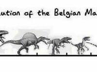 Ewolucja Malinoisa