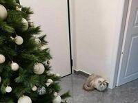 Mój kot boi się mandarynek, więc stworzyłem barierę ochronną dookoła choinki