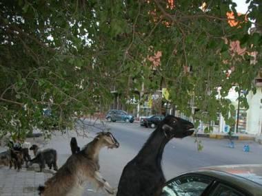 Nie parkuj pod drzewami!