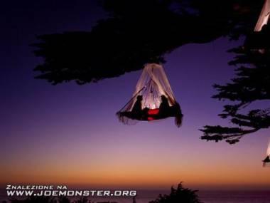 Camping na drzewie