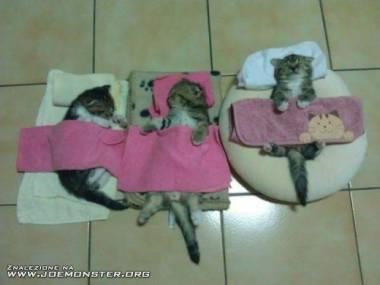 Aaa... kotki trzy