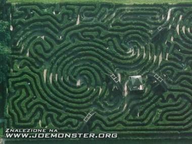 W zielonym labiryncie