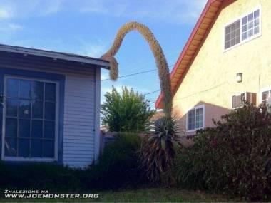 Coś sąsiadowi dom podżera