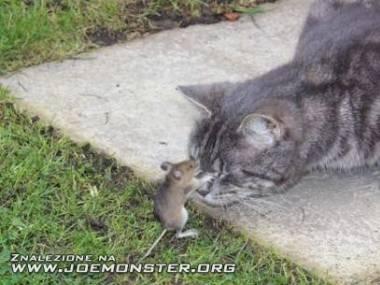 Tom i Jerry w rzeczywistości