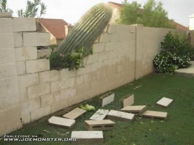 Włamanie z kaktusem w ręku