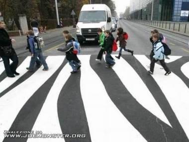 Prawdziwa zebra na drodze