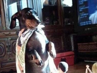 Psie bóstwo