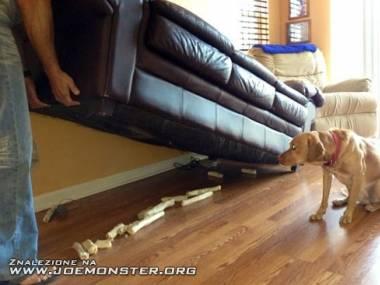 Nie mógł zakopać, to chował pod kanapą