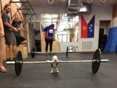 Najmniejszy na siłowni
