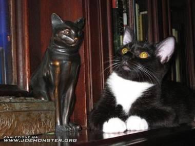 Modlitwa do kociego bożka