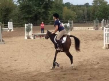 Panoramiczne zdjęcie konia w ruchu