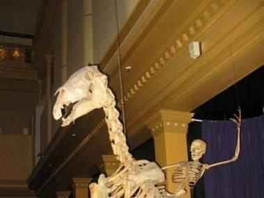 Jak się bawiono na prehistorycznym zachodzie