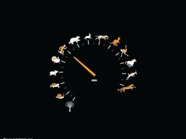 Prędkościomierz przyrodniczy