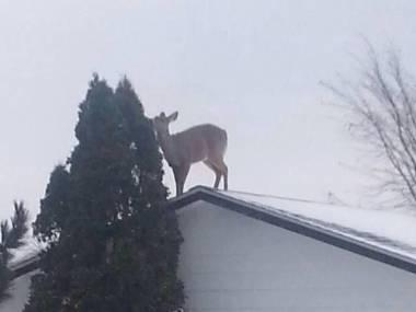 Zima wzmacnia kreatywność u zwierząt