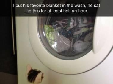 Wsadziłem do pralki jego ulubiony kocyk, już od pół godziny siedzi w tej pozycji