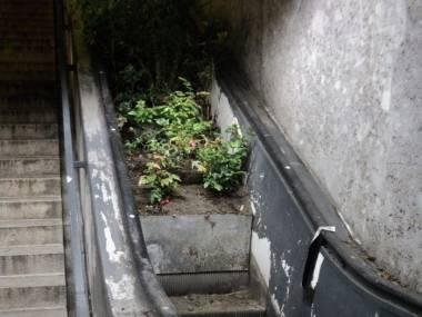 Z tych schodów to już dawno nikt nie korzystał