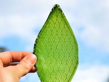 Pierwszy sztucznie wytworzony przez człowieka liść