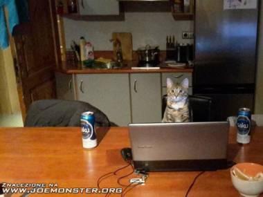 Co robi kot, gdy właściciela nie ma w domu?