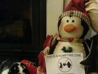 Minęło 0 dni od ostatniego seksualnego zamachu na pingwina