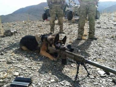 Najlepszy snajper w całym pułku