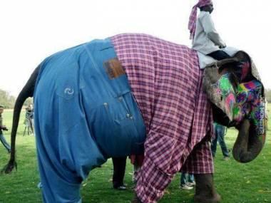 Najlepiej ubrany spośród wszystkich słoni na świecie