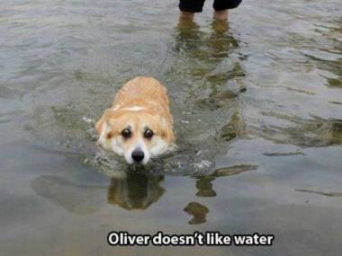 Oliver nie lubi wody