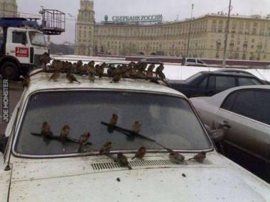 Miejsce zbiórki rosyjskich wróbli