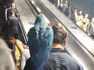 Wsiadł do metra czlowiek z ptakiem na głowie