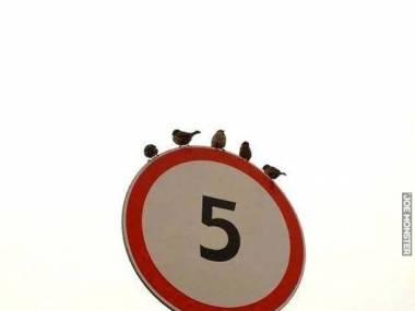 Pięć i ani jednego więcej