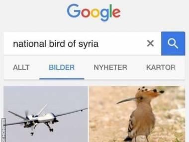 Narodowy ptak Syrii