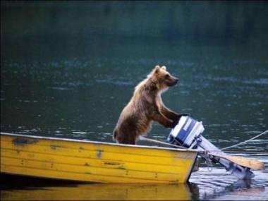 Płynę na łososie!