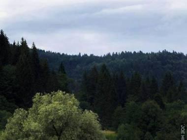 Obrazek z Bukowiny