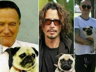 Ten pies przynosi naprawdę samobójczą smierć, czy to tylko ponury przypadek?