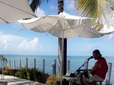 Muzyka przyciąga iguany