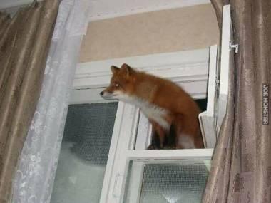 Firefox znalazł dziurę w Windowsie